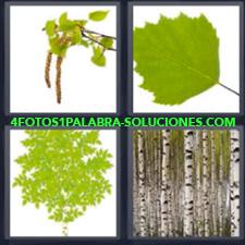 4 fotos 1 Palabra: Rama, Hojas Verdes, Troncos, Bosque