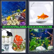 4 Fotos 1 Palabra - Acuario Pecera Peces Pez de juguete |