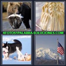 4 fotos 1 Palabra - 6 letras: oso con pescado Baked postre pay Bandera Estados Unidos Lobos |