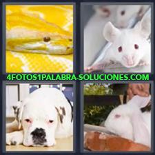 Serpiente o víbora Amarilla, Ratón o conejilla blanca de laboratorio, Perro, Conejo blanco.