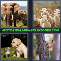 Elefante, Ovejas, Corderos, Cabras, Perro y Gato, Ardilla sobre un árbol |