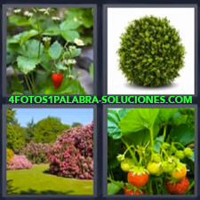 4 Fotos 1 Palabra - fresas planta Jardín Plantas con frutos |