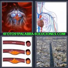 4 Fotos 1 Palabra - Avenida principal ciudad Dibujo aparato circulatorio Dibujo sistema circulatorio Venas y arterias |