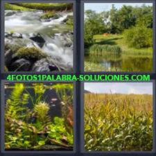 4 Fotos 1 Palabra - Fondo de rio Plantaciones Rápidos en rio Rio en bosque |
