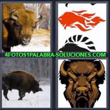 4 Fotos 1 Palabra - Animal en la nieve Búfalo Dibujo con llamas de fuego Dibujo de especie de toro |