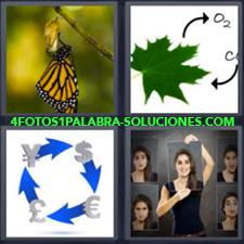 4 Fotos 1 Palabra - Chica con diferentes imágenes Dibujo hoja O2 por CO2 Divisas o diferentes monedas Mariposa |