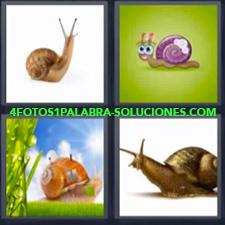 4 Fotos 1 Palabra - Animales Bichito Bicho Bichos Gasterópodo Insectos |