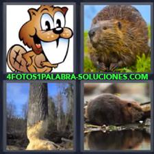 4 fotos 1 Palabra - 6 letras: animales Dibujo animal diente blanco Tronco roído desgastado mordido |