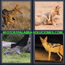 Zorro, Coyote, Pantera, Hiena, Animales parecidos a un perro, Animal parecido a zorro.