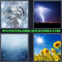 Rama de árbol congelado, Rayo en una tormenta, Girasoles bajo el sol, Lluvia |