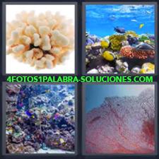 4 Fotos 1 Palabra - Oceano Arrecife Fondo Del Mar Fosiles |