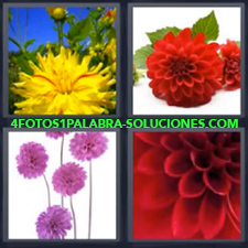 4 Fotos 1 Palabra - Flores Flor Amarilla Flor Roja Flor Rosa |