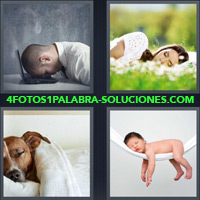 Hombre durmiendo frente a computadora, Mujer durmiendo en el parque, Perro en una cama, Bebé durmiendo |