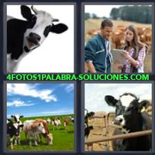 4 fotos 1 Palabra - 6 letras: vacas Mujer y hombre con papeles Vacas en el campo |