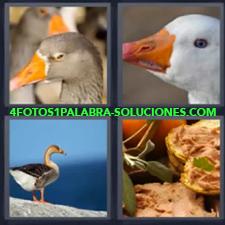 4 Fotos 1 Palabra - Aves Pajaros Patos |
