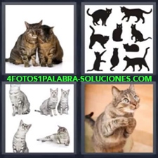 4 Fotos 1 Palabra - Gatos, Felinos |