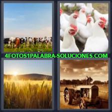 4 fotos 1 Palabra - 6 letras: campo Espigas Gallinas Ganado tractor Vacas |