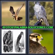 Águila, Aves, Pájaros