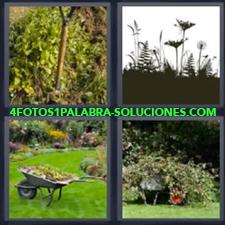 4 fotos 1 Palabra - 6 letras: vegetacion Bosque Cesped Jardin |