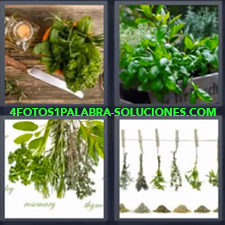 4 Fotos 1 Palabra - Diferentes tipos de plantas Planta Vegetación |