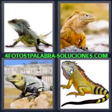 4 fotos 1 Palabra - 6 letras: lagarto Lagartos Reptil |