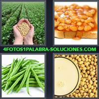 Mano con semillas, Plantación, Tostada con granos, Arbejas, Legumbres, Habichuelas, Garbanzos, Habas, Fríjol, Faba |