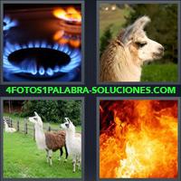 Hornalla de cocina, Llama, Llamas en una granja, Llamas en un incendio |