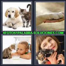 4 Fotos 1 Palabra - perro y gato Niña con gato Pata de perro con mano persona |