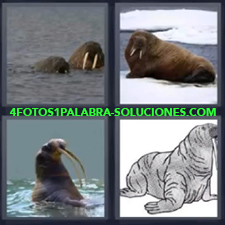 4 Fotos 1 Palabra - Foca Foca En El Mar Foca En La Nieve Leon Marino |