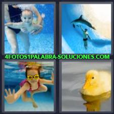 4 Fotos 1 Palabra - Bebe Buceando Hombre Con Delfín Niña En El Agua Patito |