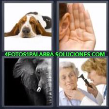 4 Fotos 1 Palabra - Perro Elefante Mano En La Oreja Señora Mayor En El Otorrino |