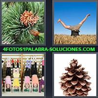 4 Fotos 1 Palabra - Piña de Pino |