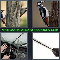 Volante, Pájaro, Volante de un coche, Pájaro en un tronco, Claxon, Pájaro Carpintero, Tronco con dos Pájaros |