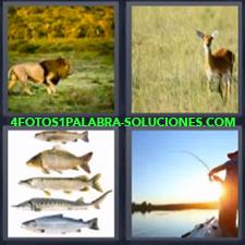 4 Fotos 1 Palabra - Leon Peces Hombre Pescando Pescados Venado O Ciervo |