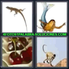 4 Fotos 1 Palabra - 4 Letras: Lagartija Sirena, Cerezas, Mono. |