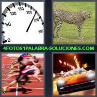 Velocímetro, Leopardo, Felino, Fiera, Pantera, Hombres, Carrera, Velocidad, Guepardo |