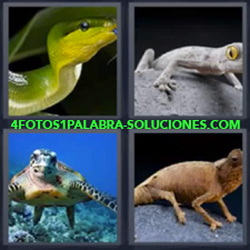 4 fotos 1 Palabra - 6 letras: serpiente tortuga Iguana Lagarto Rana |