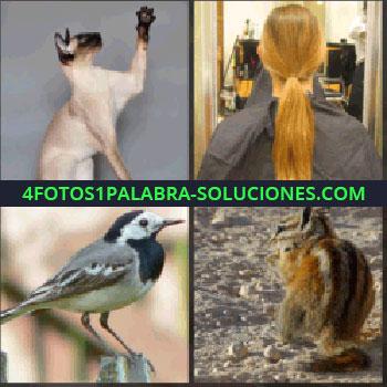 4 Fotos 1 Palabra - Gato siames. Coleta de chica. Pájaro. ardilla