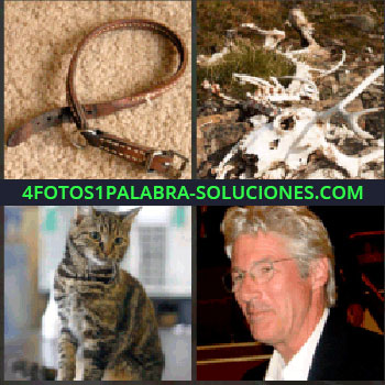 4 Fotos 1 Palabra - correa o cinturón. Esqueleto animal. Gato. Richard Gerendo