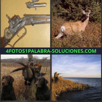 4 Fotos 1 Palabra - escopeta o fusil antiguo. Ciervo. Dos perros. Hombre disparando en un lago