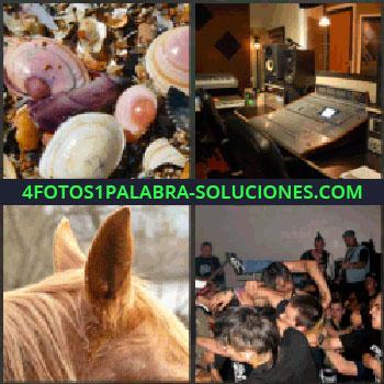 4 Fotos 1 Palabra - conchas, caparazones, almejas. Estudio de grabación. Orejas de un caballo. Multitud y forcejeo en un concierto. Enjoy