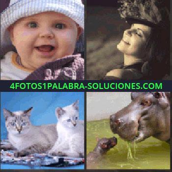 4 Fotos 1 Palabra - bebe. Señora con sombrero o tocado. Gatos. Hipopótamo con su cría
