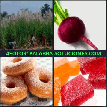 4 Fotos 1 Palabra - donas, Bosque, Rabano, Remolacha, Dulces