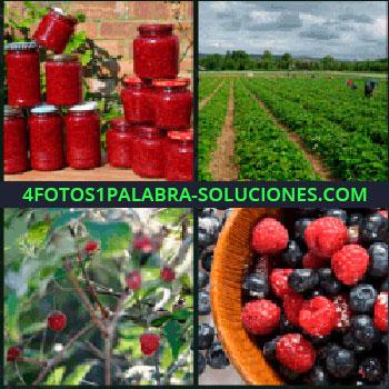 4 Fotos 1 Palabra - tarros, Plantación campo, Arbusto con frutos, Frambuesas, Arándanos, Fresas