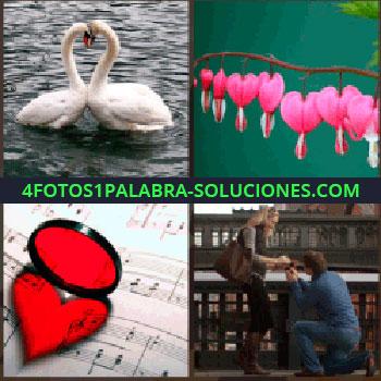 4 Fotos 1 Palabra - Colgantes rosas en forma de corazones, hombre arrodillado declarándose a mujer, lupa roja sobre partitura, cristal rojo cisnes.