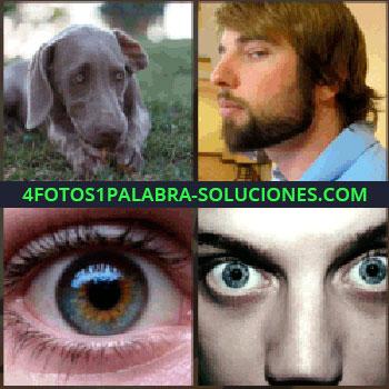4 Fotos 1 Palabra - Perro, chico con barba mirando de lado, ojos muy abiertos, ojo que estabas buscando...