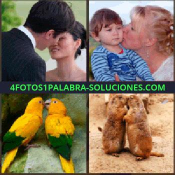 4 Fotos 1 Palabra - Novios a punto de besarse, madre besando a su hijo, dos marmotas, loros amarillos