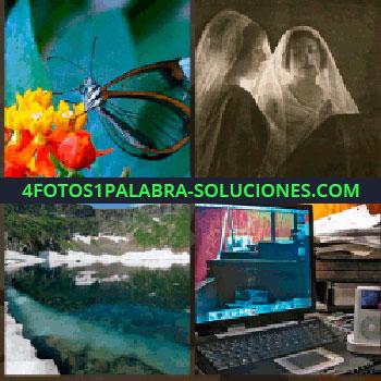 4 Fotos 1 Palabra - Mariposa con alas transparentes en flor amarilla y roja, paisaje con lago, escritorio con ordenador, teclado y iPod, novia antigua ...