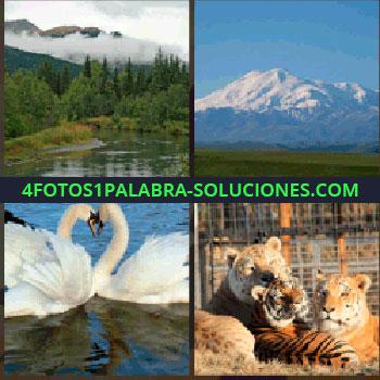 4 Fotos 1 Palabra - Paisaje con lago, montaña nevada, familia de tigres, cisnes tigres