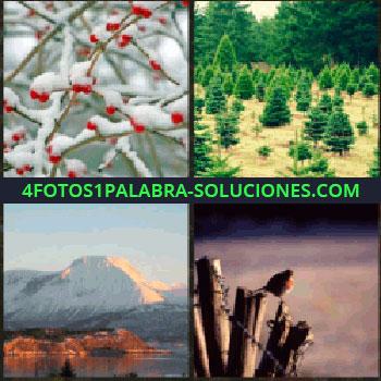 4 Fotos 1 Palabra - Bosque con abetos, nieve sobre ramas con frutos rojos, pájaro sobre unos palos, atardecer montaña nevada